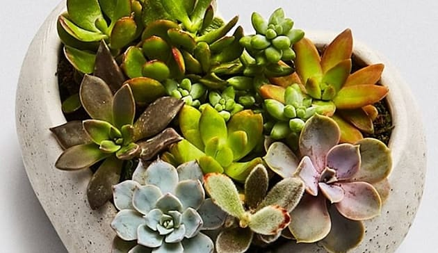 thrive_succulents.jpg